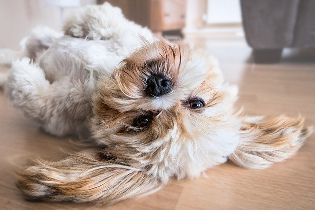 Sød hund ligger på hovedet